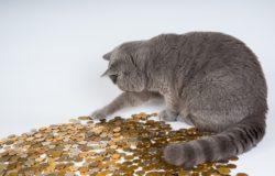 kocka a mince
